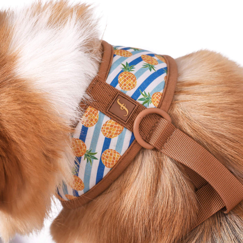 Pina Collarda - Friendship Harness