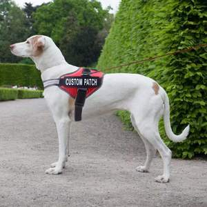 Doggy Boutique | HARNESS PRO PETTORINA REGOLABILE