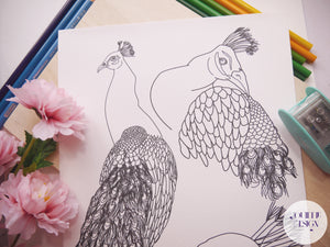 Colouring Page - Peacock
