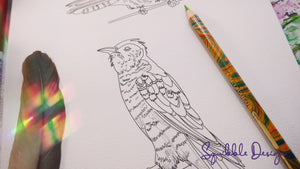 Colouring Page - Shining Cuckoo