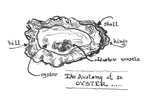 The Anatomy of an Oyster