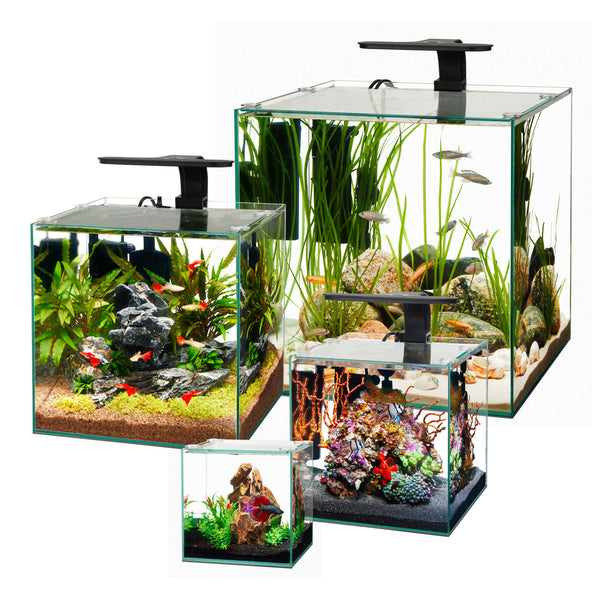 Aqueon Frameless Glass Cube Aquariums (Multiple Sizes Available)