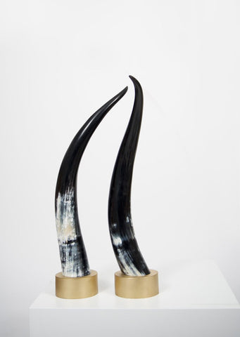 Unique Ankole Dark Decorative Horn Set - Black Sheep (White Light)