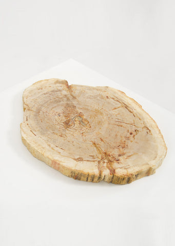 Petrified Wood Light Decorative Slab - Black Sheep (White Light)