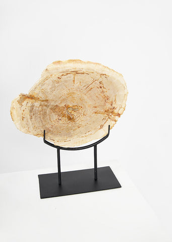 Petrified Wood Light Decorative Slab on Stand - Black Sheep (White Light)