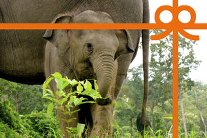 eCard: Give elephants freedom - World Animal Protection