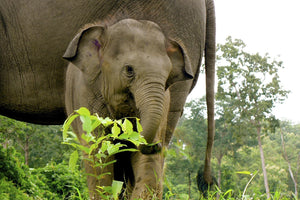 Give elephants freedom