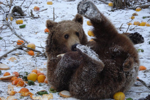 Feed a hungry bear for a month
