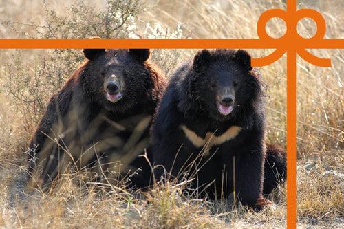 eCard: Heal two bears - World Animal Protection