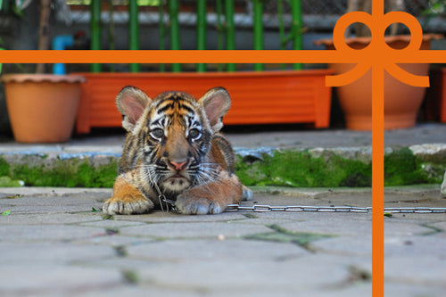 eCard: Stop tiger selfies - World Animal Protection