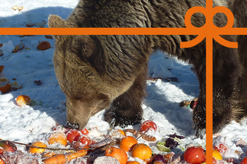 eCard: Feed a hungry bear for two weeks - World Animal Protection