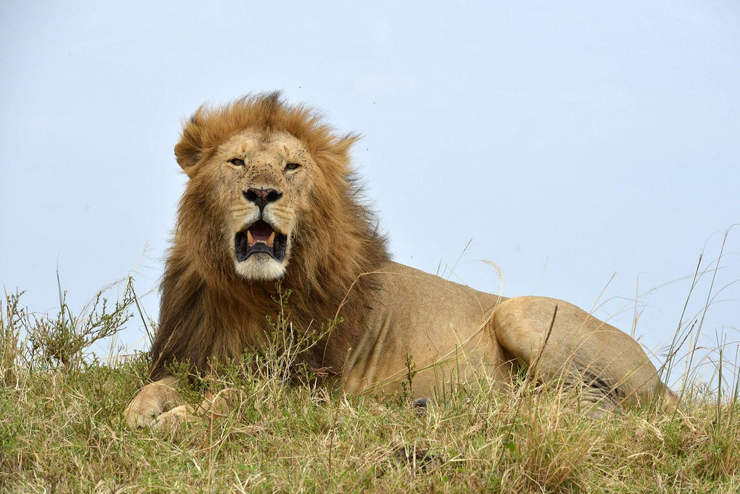 End the lion trade