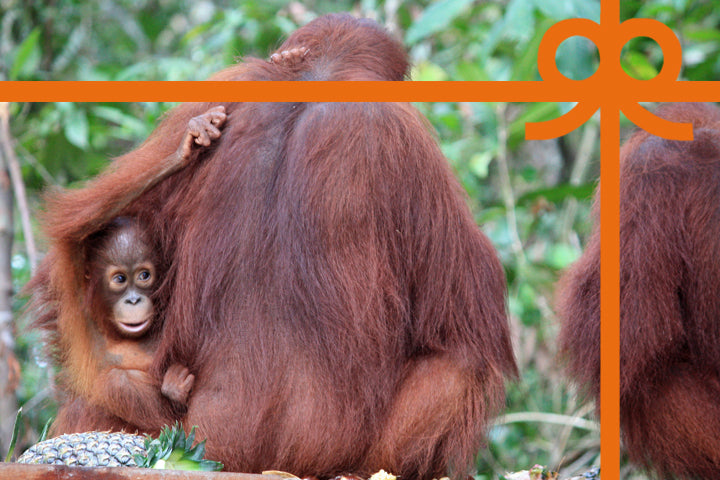 Orangutan mum with her baby.