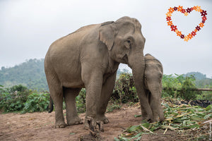 Elephant Tong Khun with her baby Kit.
