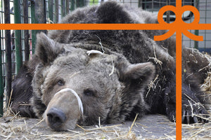 eCard: Free a captive bear - World Animal Protection