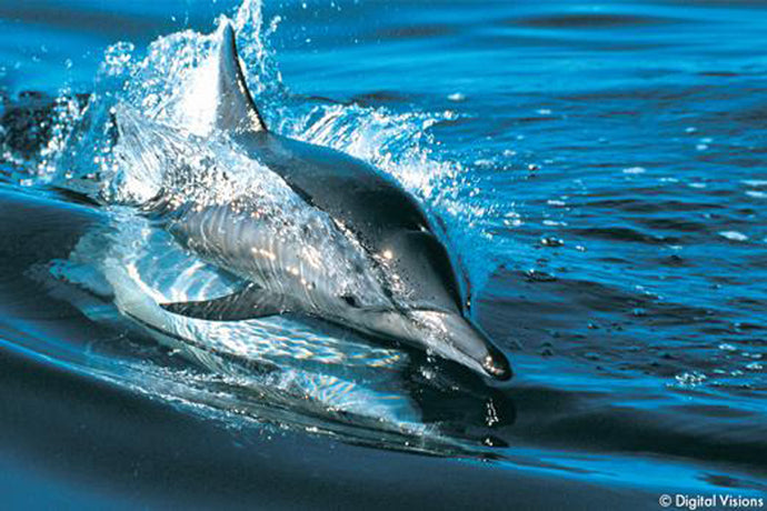 Help protect dolphins