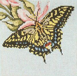 Anise Swallowtail Butterfly (18M)