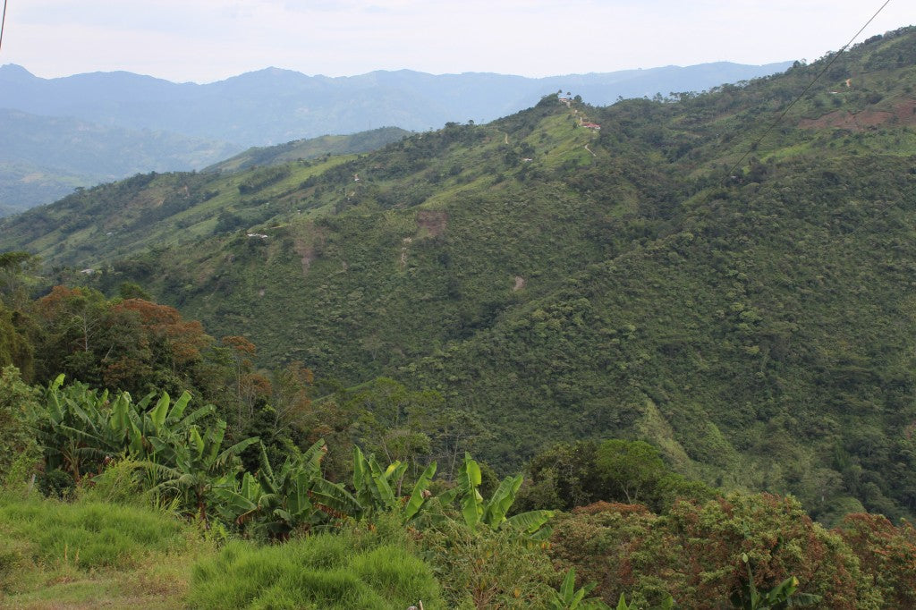 coffee plantation in the hills of colombia - Model Bean coffee