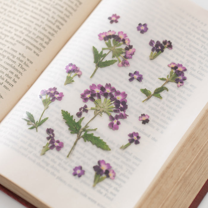 Appree Press Flower Sticker - #17 Verbena