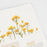 Appree Press Flower Sticker - #20 Rapeseed Flower