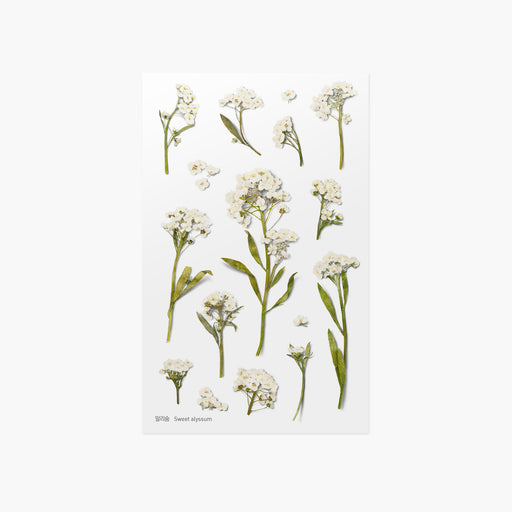 Appree Press Flower Sticker - #16 Sweet Alyssum