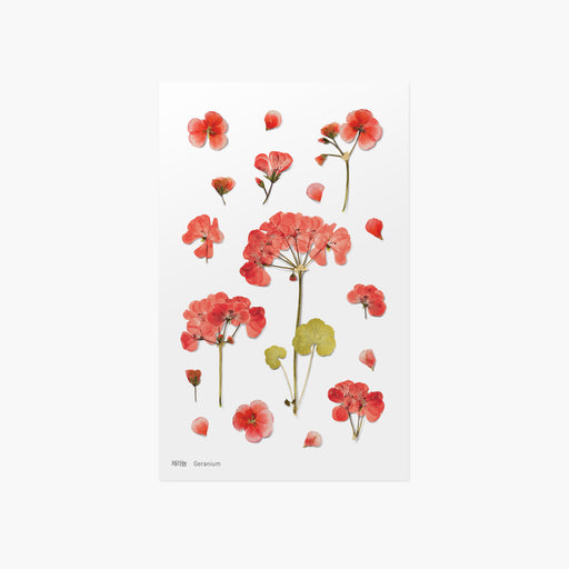 Appree Press Flower Sticker - #09 Geranium