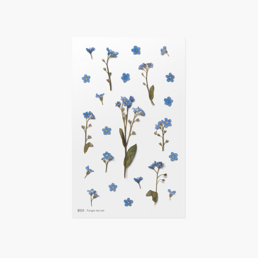 Appree Press Flower Sticker - #05 Forget Me Not