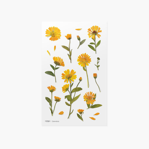 Appree Press Flower Sticker - #14 Calendula