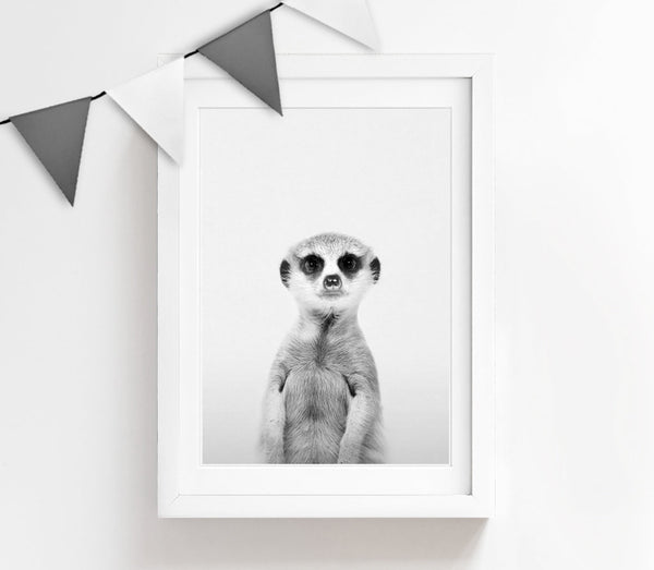 Black and White Baby Meerkat Print