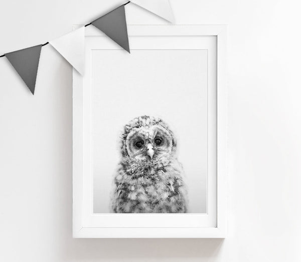 Black and White Baby Owl Print