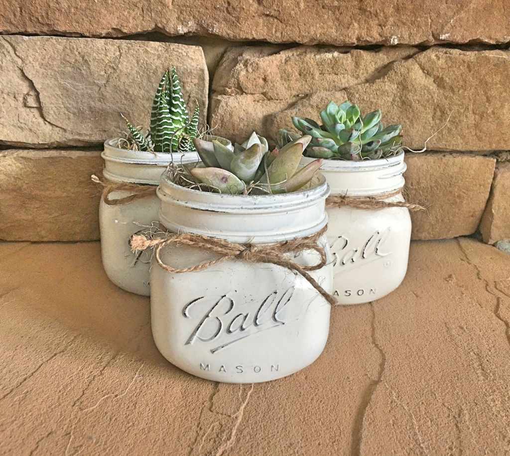 live succulent plants inside real mason jars