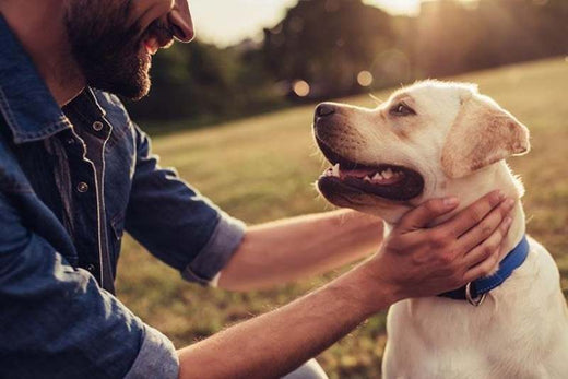 Joint Pain & Arthritis in Dogs and Cats
