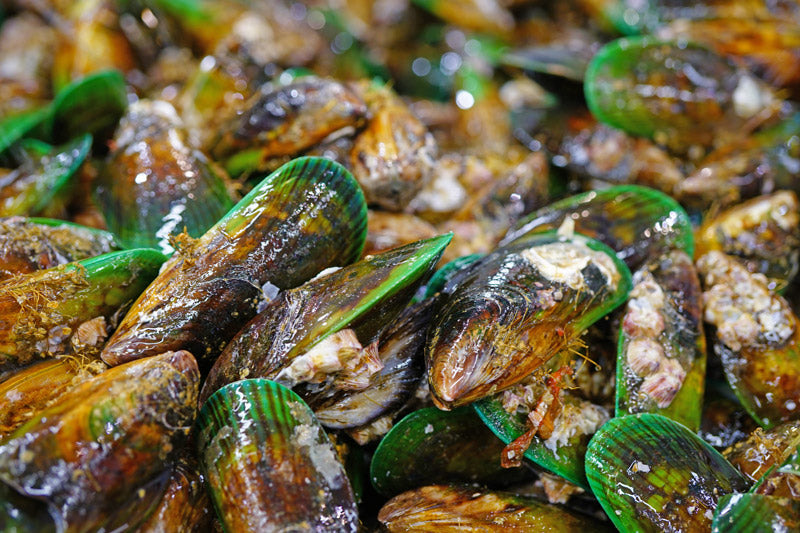 Green Lipped Mussel Joint Supplement