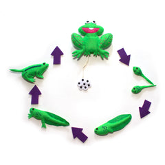 Life Cycle Character Set - Frog