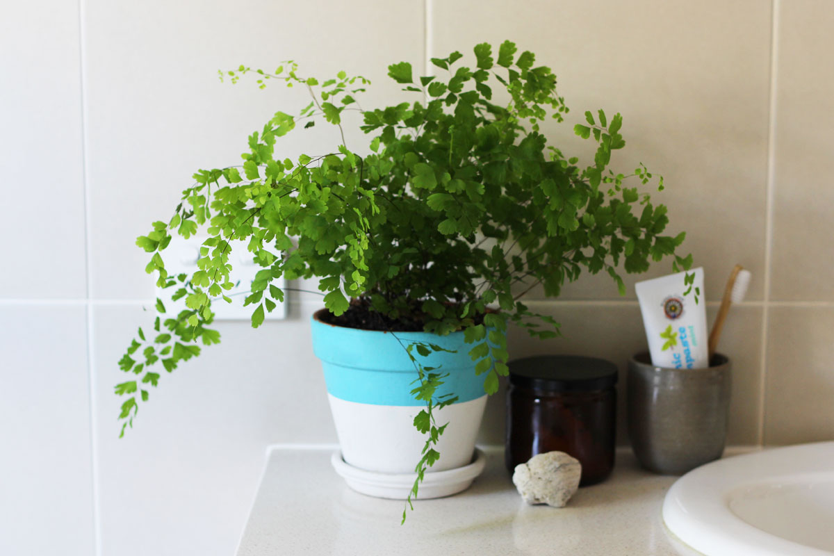 Benefits of air purifying plants