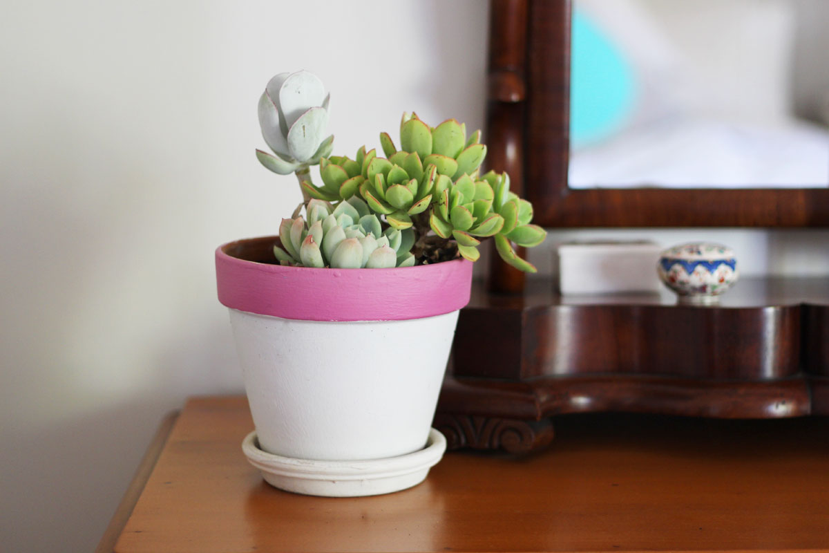 5 benefits of air purifying plants