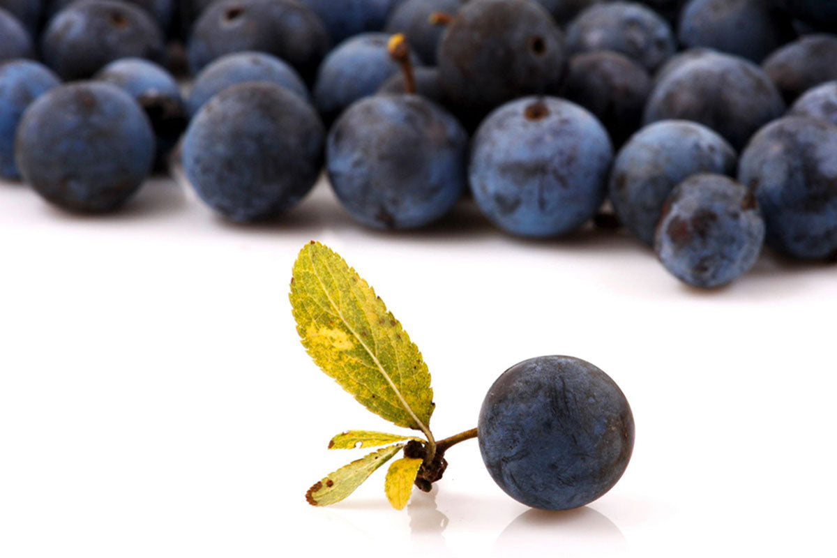 Superfood Feature The Health Benefts Of Maqui Berry The