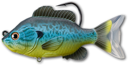 555 Blue / Yellow Pumpkinseed