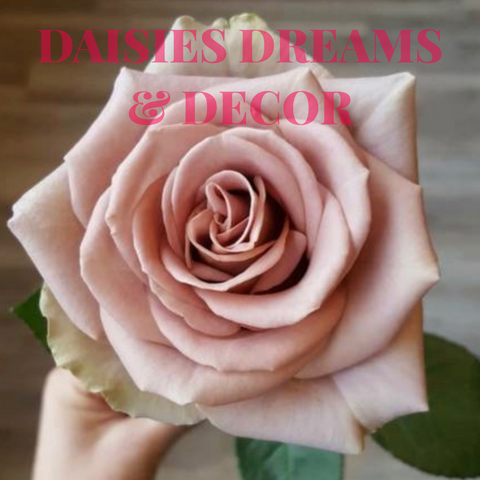Daisies Dreams & Decor Store in Melfort Saskatchewan