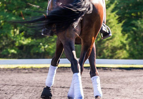 Introducing Lateral Work - The Leg-Yield
