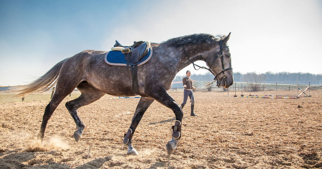 horseXperiences Stories Horse Lunging Session