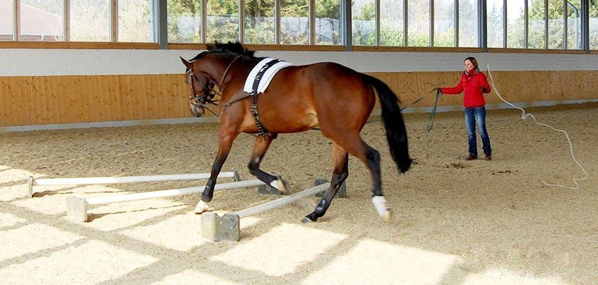 horseXperiences Stories Lunging