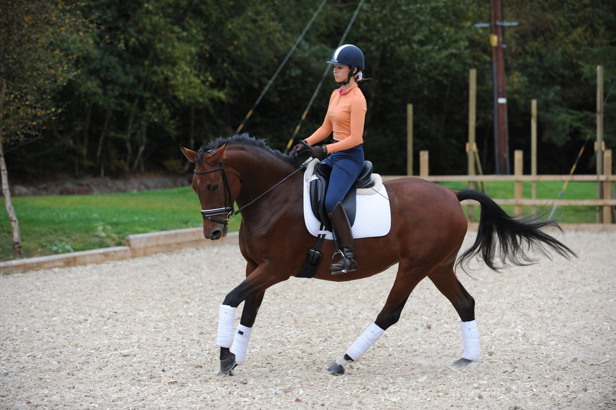 horseXperiences Stories Dressage Canter