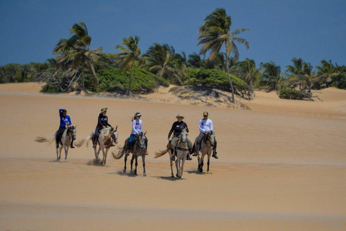 Coconut Trail Ride - horseXperiences™ GO EQUESTRIAN