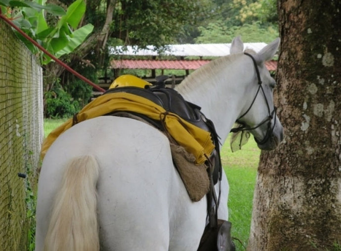 Tropical Connection - horseXperiences™ GO EQUESTRIAN