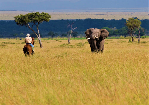 Africa's Big 5 Safari