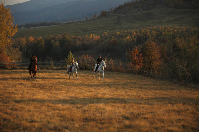 Carpathia Forests & Bears - horseXperiences™ GO EQUESTRIAN