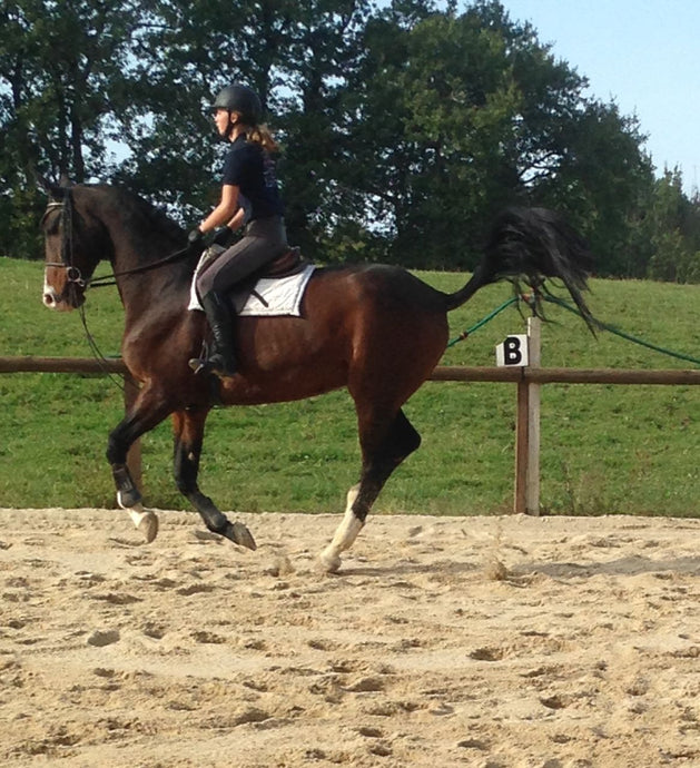 French Sport Training eXperience - horseXperiences™ GO EQUESTRIAN