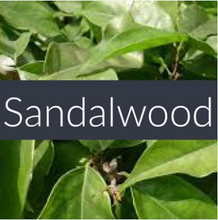 Load image into Gallery viewer, Sandalwood Essential Oil