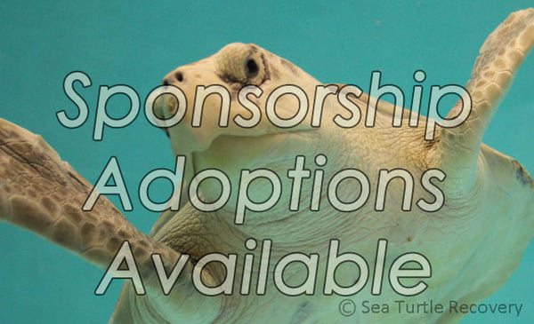 Legacy Sea Turtle Sponsorship Adoption